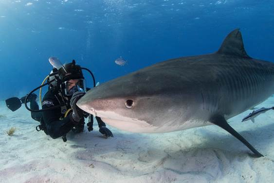 """Eli Roth's Shark Doc Film FIN🦈 